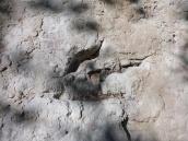 Bonus: Dinosaur footprints!