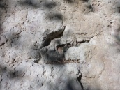 Bonus: Dinosaur footprints!