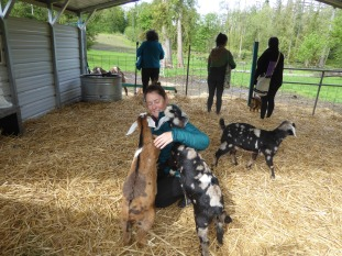Goat hugs