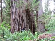 Just a random big tree.
