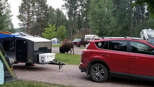 Bison in my campsite at Legion Lake Campground