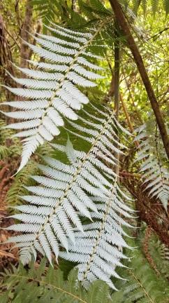 Silver Fern, Abel Tasman