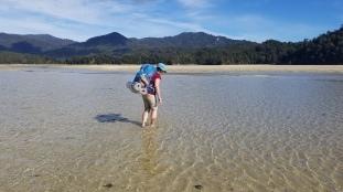 Crossing the Awaroa Estuary